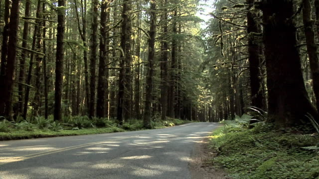 MS, PAN, Road through forest, Olympic National Park, Washington, USA
