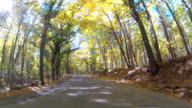 Road through mixed forest, GoPro