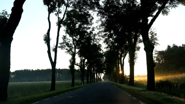 Road with trees on the side and sun