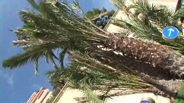 HD: Roadside palms