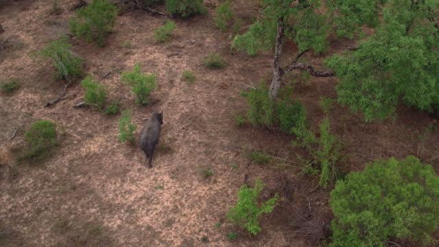 Roaming alone through the bush