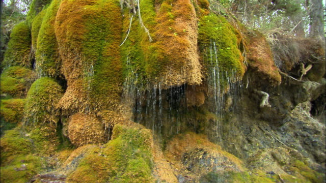 MS TU Rocks covered with moss and water dripping, Pylos, Messenia, Greece