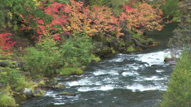 MS, Rogue River surrounded with trees in Autumn colors, Oregon, USA