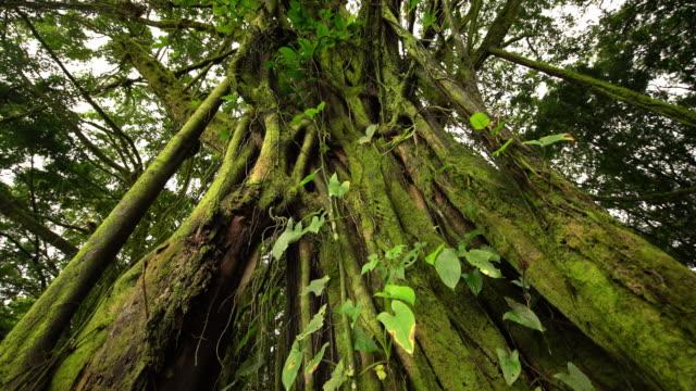 TU Wurzeln eines tropischen Baumes
