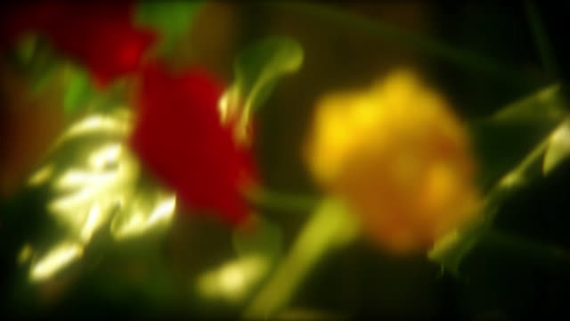 Roses HD1080, NTSC, PAL