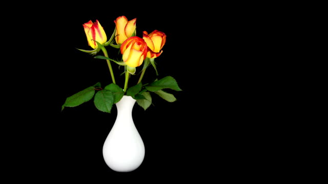 Roses in a Vase; TIME LAPSE