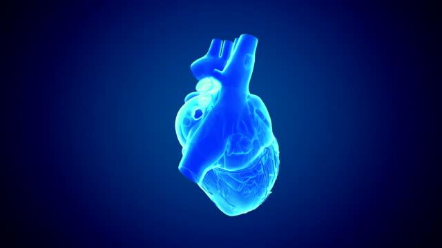 Rotierende Herz
