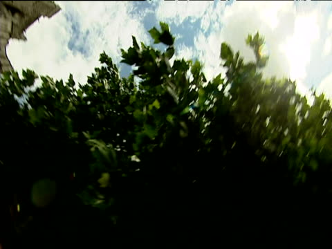 Rotating shot looking through trees at blue sky with white clouds to stone Cathedral Burgundy