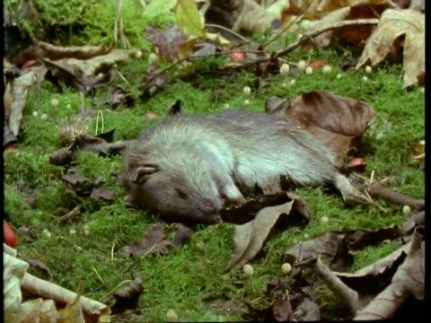 T/L MCU rotting mouse