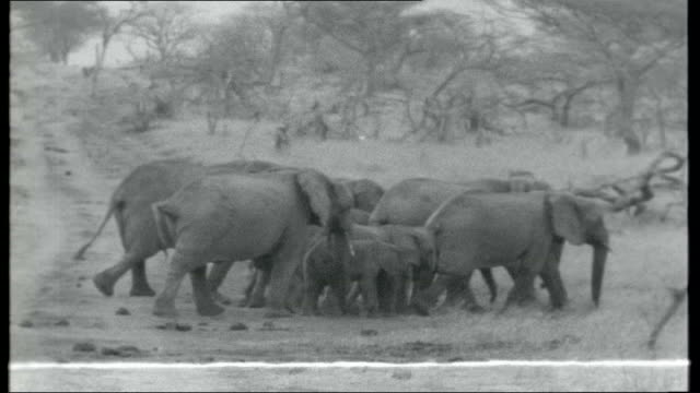 The Giant Thirst Titles KENYA Nairobi Game Park EXT Reporter to camera with orphan baby elephants Herd of elephants walking through game park Zebras...