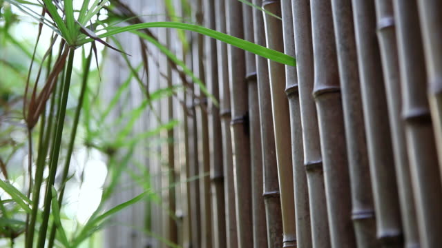 MS TD PAN Row of bamboo fence / Kauai, Hawaii, United States