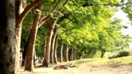 row of trees in the park.