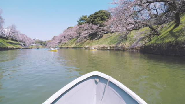 Rowboat on lake with Cherry Blossom