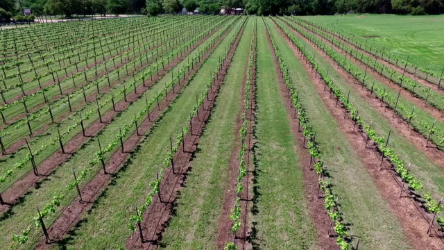 Rows and Rows To make Wine