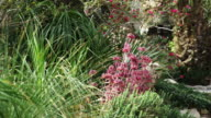Royalty Free Stock Video Footage of green and pink flora shot in Israel at 4k with Red.