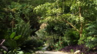 Royalty Free Stock Video Footage of vegetated oasis pathway shot in Israel at 4k with Red.