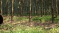 Rubber tree slider