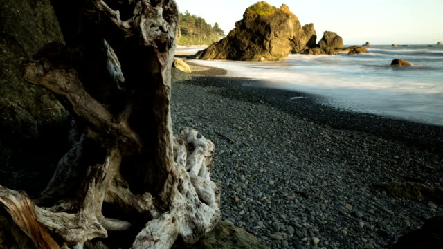 Ruby Beach Driftwood Panning Time-lapse