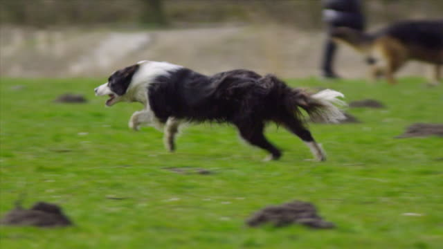 Run! slow motion (1080p)