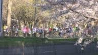Runners pass cherry blossom trees