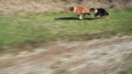 Running Hunde