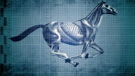 Running Horse Muscles in Motion
