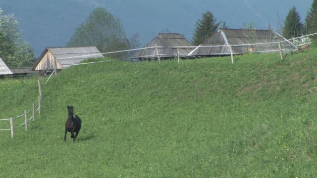 HD: Running horse
