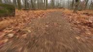Läuft durch den Wald