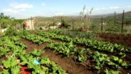LS rural farm, KwaZulu Natal, South Africa