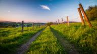 CRANE: Rural farm track at summer time - 4K Nature/Wildlife/Weather