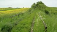 Rural German Landcape in early Summer