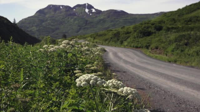 Rural gravel road with Cow Parsnip in foreground, Kodiak, Alaska