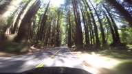 A rural road in the Northern California coastal area with the Pacific Ocean and Redwood trees.