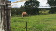 Rural scene of a horse and birds flying around, in slow motion, Byron Bay