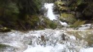 Ruscello con cascatella in un bosco di pini