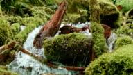 Rushing macro stream mossy lush 4 Columbia River Gorge Oregon Waterfalls 04