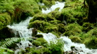 Rushing macro stream mossy lush 5 Columbia River Gorge Oregon Waterfalls 05