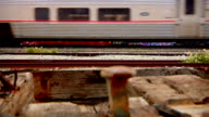 Rusted rail spikes sticking vertically out of old wood tie FG ZI CU Amtrak train moving across tracks in front of stationary freight train cars w/...