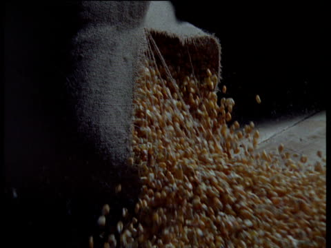 Sack of maize falls and splits on store floor, shedding its contents, UK