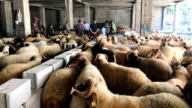 Sacrificial animals are seen for sale at an animal market during celebrations to mark the EidalAdha feast on August 31 2017 in Gaziantep Turkey...