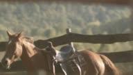 Gesattelt Pferd zu Fuß auf dem Hof