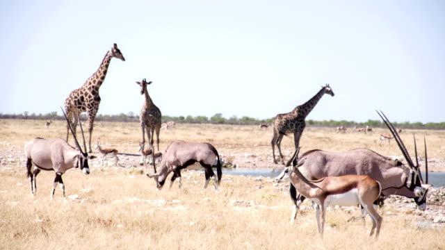 LS Safari Animals By The Waterhole