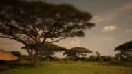 Safari  bush camp