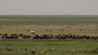 Safari Vehicle surrounded by herds of wildebeest