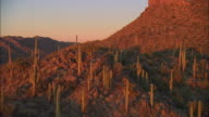 LOW AERIAL Saguaro cactus covered mountains at sunset, Tucson, Arizona, USA