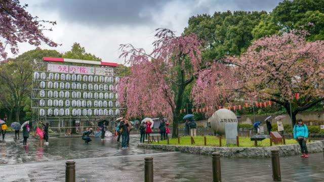 Sakura in front of Ueno park , Ueno Tokyo , Japan , Timelapse movement
