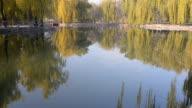 Salix babylonica garden is belong to clear lake