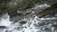Salmon attempt to swim against rapids.