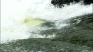 Salmon leap up a waterfall.