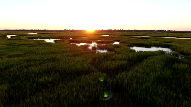 Salt marsh fly-through